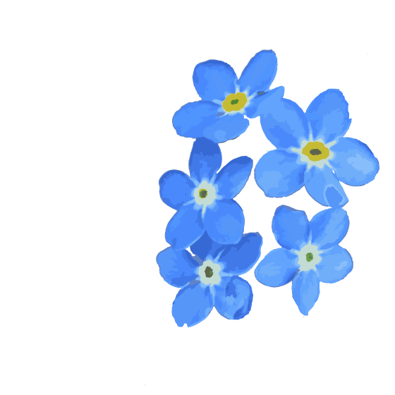 myosotis_background